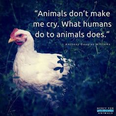 Let's work towards a world where humans no longer harm animals.
