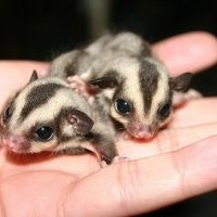 Cutest Animals You've Never Heard Of