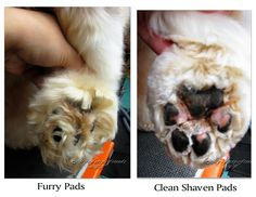 Pet Grooming: The Good, The Bad, & The Furry: Tuesday's Tip 21 Trimming Feet