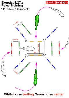 https://www.horsephysio.ch/images/details/L27/L27.c.jpg