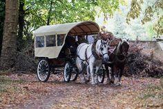 Balade en calèche #chevaux #attelage #promenade