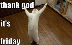 TGIFF ( thank god it's feinstein friday ) Friday Cat, Friday Weekend, Weekend Fun, Tgif Funny, Funny Cat Memes, Funny Friday, Friday Humor, Funny Facts, Tgif Fridays