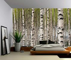 Birch Tree Forest - Large Wall Mural, Self-adhesive Vinyl Wallpaper, Peel & Stick fabric wall decal