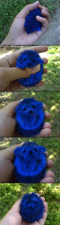 Animal cruelty or the greatest Sonic homage ever? I want a hedgehog!!!!!!