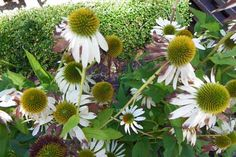 Schaugärten in Österreich - #gartentulln #tulln #niederösterreich #askEnrico Plants, Nature, Lawn And Garden, Nice Asses, Plant, Planets