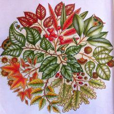 Jardim Secreto/ Frutinhas /Johanna Basford