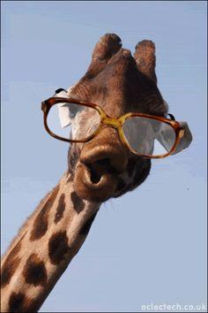 Tao of the Giraffe Cute Wild Animals, Cute Funny Animals, Funny Cute, Animals Beautiful, Animals And Pets, Baby Animals, Giraffe Drawing, Giraffe Art, Cute Giraffe