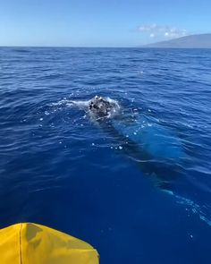 Humpback Whale jumping out of the water Beautiful Sea Creatures, Animals Beautiful, Whale Video, Rare Animals, Strange Animals, Orcas, Underwater Animals, Humpback Whale, Whale Sharks