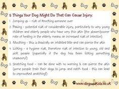 5 Things Your Dog Might Do That Can Cause Injury