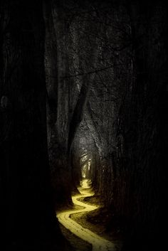 A dark woods with a pretty path that leads to a place where all imagination unfolds...