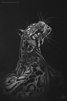 Subtle Streaks - Clouded Leopard, Nebelparder