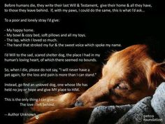Adopting another dog after yours has passed isn't replacing your previous dog; it's giving another dog a chance at life.