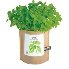 Basil in a bag: love! Garden-in-a-bag Basil from NATURE DETAILED