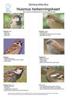 Beautiful Birds, Animals Beautiful, Animals And Pets, Funny Animals, Bird Identification, Kinds Of Birds, Bird Food, Fauna, Wild Birds