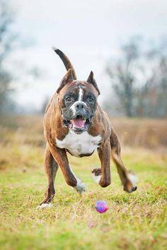 """""""I'll get it! I'll get it!""""... #Boxer"""