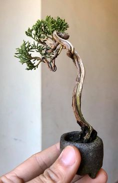 40 Best Bonsai Trees Ideas For Home Decor Inspiration - Bonsai Trees For Sale, Bonsai Tree Care, Bonsai Art, Bonsai Plants, Bonsai Garden, Garden Trees, Cacti Garden, Air Plants, Cactus Plants