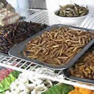 Entomophagy is the next food trend, so take note.  It's not that different from vermiculture or even keeping backyard chickens; in fact, you can add bug culture to your homestead's food web.