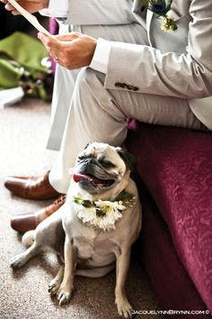 Doggie Corsage. Even your beloved pet can wear flowers to the wedding!
