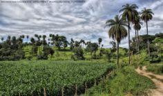 https://flic.kr/p/E2NHau | Recanto Das Cachoeiras  28 | Pousada Rural Facenda Recanto Das Cachoeiras . Sete Lagoas . Minas Gerais / Artexpreso . Rodriguez Udias / Sorrisos do Brasil . Fotografia . Dic 2015 / Fev 2016 (*PHOTOCHROME system edition)
