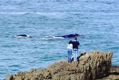 A guide whale watching in Hermanus, Cape Town. Find out more about whale watching in Cape Town and whale watching in Hermanus. Cool Countries, Countries Of The World, South Africa Holidays, Africa Continent, Travel Flights, Whale Watching, Africa Travel, Cape Town, Continents