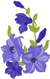 Flower 34