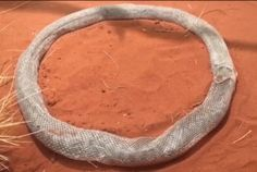 A Shedding Snake Trapped Itself in a Loop of Its Own Skin  This snake trapped itSELF while shedding and then was stuck in its skin for over three hours trying to find a way out. Maybe snakes aren't so deadly!?