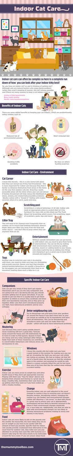 The Mummy Toolbox - Indoor cat care infographic. All the information you need on indoor cat care! - #infographic #cats #catlovers #catsofinstagram #catstagram #cat