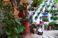patios de cordoba 2014 - Buscar con Google