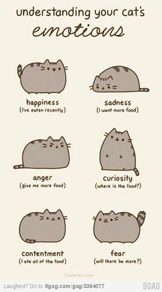 sentimento dos gatos hehe