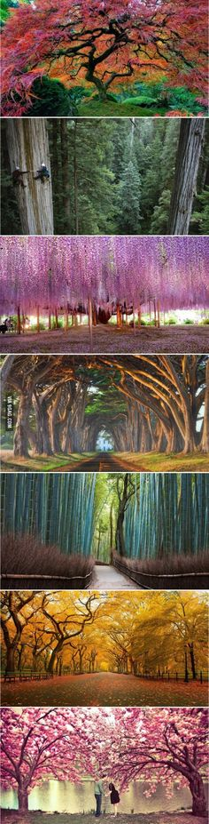 Some of the world's most beautiful trees
