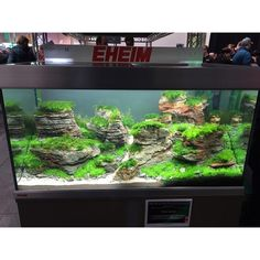 Another great aquascape from a show by Eheim for our aquarium/pond of the day