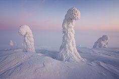 Los centinelas del Ártico y el cinturón de Venus  La NASA ha publicado esta magnífica fotografía realizada por Niccolò Bonfadini.  En ella se puede apreciar un paisaje, que parece sacado de un sueño, de Laponia;en la parte que corresponde a Finlandia.  Las columnas no son otra cosa que árboles enormes cubiertos de nieve y hielo; que la tradición popular del lugar transforma en vigilantes de estos parajes inhóspitos.