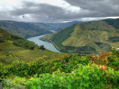 Rio Douro Douro is our supreme inspiration Douro Portugal, Douro Valley, Port Wine, Summer Beauty, Trees To Plant, Vineyard, River, Vacation, Places