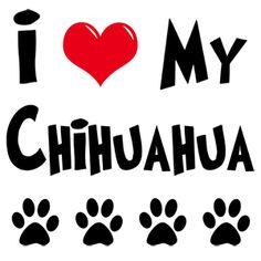I love my chihuahua!