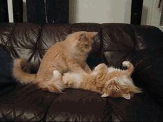 Massage :)
