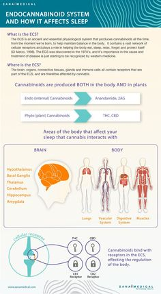 Did you know that the endocannabinoid system affects your sleep? Arm yourself with valuable knowledge on the parts of your brain and body that medical cannabis can effectively influence. This awareness will help you to get the most from your medicine. Medical Cannabis, Cannabis Oil, Cannabis News, Endocannabinoid System, Oils For Sleep, Workouts For Teens, Sleep Issues, Natural Medicine, Insomnia