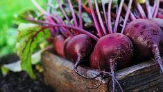 Červená řepa se hodí do teplé i studené kuchyně When To Plant Vegetables, Growing Vegetables, Fruits And Vegetables, Veggies, Turnip Salad, Beet Kvass, High Potassium Foods, Growing Peas, Raw Beets