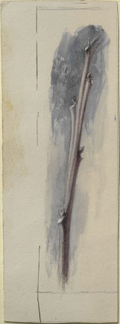 Ruskin, John - Study of an Oak Twig Pre Raphaelite Brotherhood, Drawing School, John Everett Millais, John Ruskin, English Artists, Drawing Websites, Botanical Drawings, Sketchbook Inspiration, Writing Styles