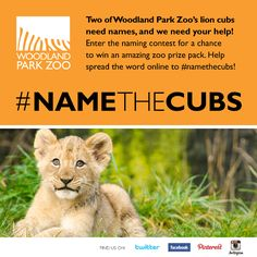 Enter Woodland Park Zoo's lion cub naming contest at www.zoo.org by March 15. SO FUN