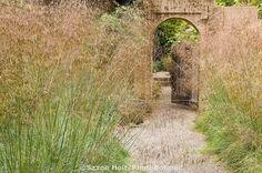 Pathway between garden borders of Giant Stipa gigantea grass leading to garden door Gary Ratway garden