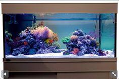 Reef tank saltwater fish aquarium