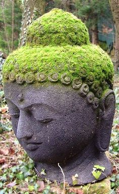 Moss on the peaceful Buddhas's head.  He sits so still that snails rest of him.