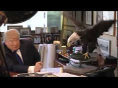 Bald Eagle Called Uncle Sam Attacks Donald Trump