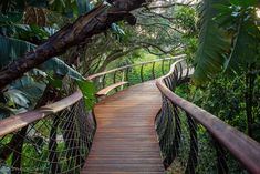 Boomslang Walkway | Kirstenbosch Arboretum Cape Town, South Africa | Mark Thomas and Henry Fagan | photo © Adam Harrower