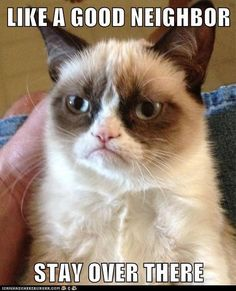 Funny pictures about Meet Grumpy Cat. Oh, and cool pics about Meet Grumpy Cat. Also, Meet Grumpy Cat. Grumpy Cat Quotes, Meme Grumpy Cat, Gato Grumpy, Grumpy Kitty, Funny Cute, Funny Memes, Funny Sayings, Funny Stuff, Funny Animals