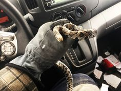 This is one of Ontario's Milk Snakes. He fell into a sub-pump in the basement of a home. We caught him and released him back outside into the wild.