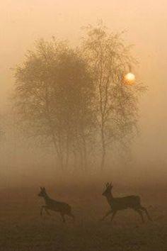 Serene: deer in a foggy landscape Wild Life, Beautiful World, Animals Beautiful, Mundo Animal, Belle Photo, Bambi, Animal Kingdom, The Great Outdoors, Mother Nature