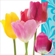 Springtime 2 Ply Beverage Napkin/Case of 192 Tags: Springtime; Beverage Napkin; Floral Party; floral theme party tableware;froral design Beverage Napkin;Springtime Beverage Napkin; https://www.ktsupply.com/products/32786352068/Springtime-2-Ply-Beverage-NapkinCase-of-192.html