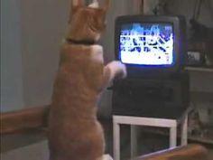 Gato que gosta de boxe   Veja mais em: http://www.jacaesta.com/gato-que-gosta-de-boxe/