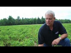 University of Maine Cooperative Extension discusses how Late Blight affects your tomato and potato plants, how to identify the disease, and how to minimize i. Home Vegetable Garden, Tomato Garden, Tomato Plants, Tips For Growing Tomatoes, Grow Tomatoes, Cherry Tomatoes, Gardening For Beginners, Gardening Tips, Tomato Plant Diseases
